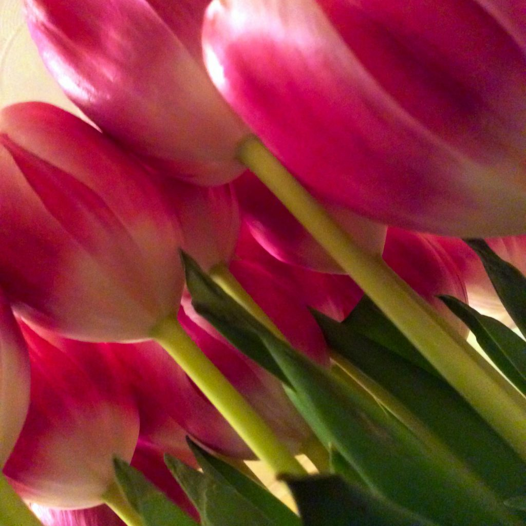 Tulips from a different angle